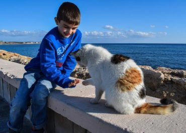 Training Your Cat: Doing it Right