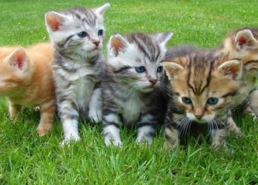Did You Know… 6 Astounding Facts About Cats!