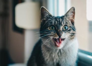 Cat Behavior 101: 5 Things You Need to Know