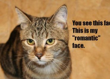 10 Awesome Reasons Cats Are Way Better Than Boyfriends Or Girlfriends